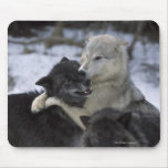 USA, Montana, Wolves playing in snow Mouse Mats