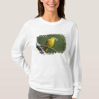 USA, Montana, yellow warbler Dendroica T-Shirt