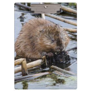 USA, Nebraska. Beaver Clipboard