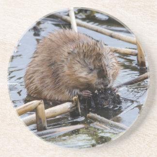 USA, Nebraska. Beaver Coaster