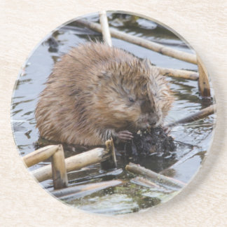 USA, Nebraska. Beaver Coasters