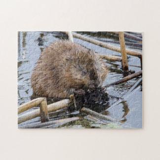 USA, Nebraska. Beaver Jigsaw Puzzle