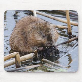 USA, Nebraska. Beaver Mouse Pad