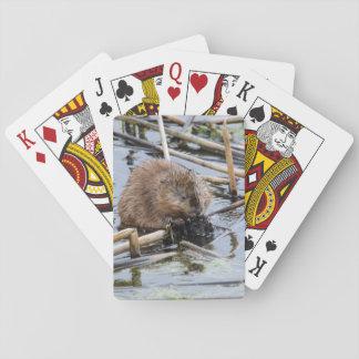 USA, Nebraska. Beaver Poker Deck