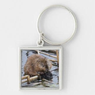 USA, Nebraska. Beaver Silver-Colored Square Key Ring