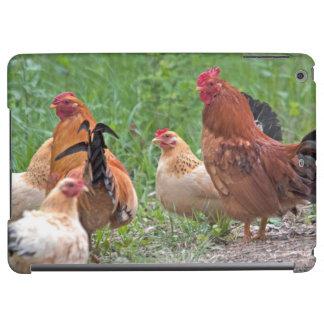 USA, Nebraska. Chickens
