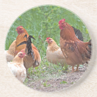 USA, Nebraska. Chickens Coasters