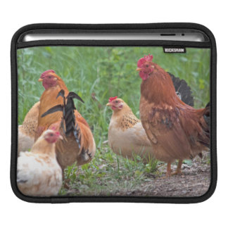 USA, Nebraska. Chickens iPad Sleeve