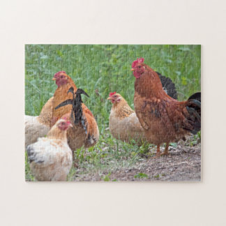 USA, Nebraska. Chickens Jigsaw Puzzle