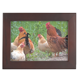 USA, Nebraska. Chickens Keepsake Box