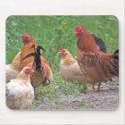 USA, Nebraska. Chickens Mouse Mat
