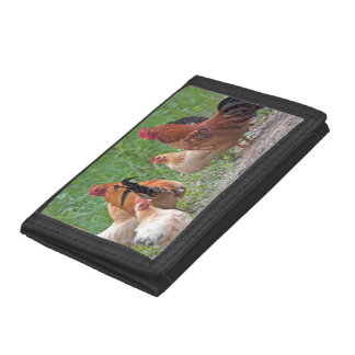 USA, Nebraska. Chickens Tri-fold Wallet