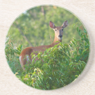 USA, Nebraska, White Tail Doe On Hill Drink Coasters