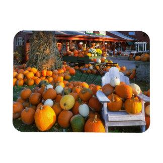 USA, New England, Maine, Wells. Autumn Display Rectangular Photo Magnet