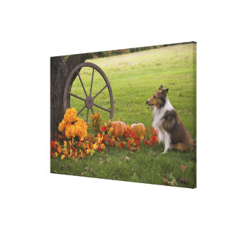 USA, New England, Massachusetts, Waltham, Gore Gallery Wrapped Canvas