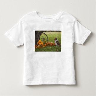 USA, New England, Massachusetts, Waltham, Gore Tshirts
