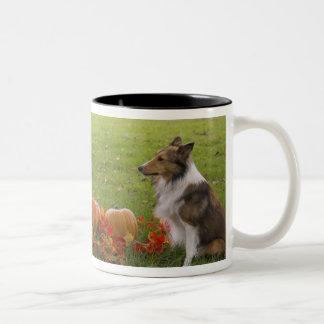 USA, New England, Massachusetts, Waltham, Gore Two-Tone Coffee Mug