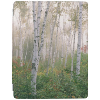 USA, New Hampshire. Birch trees in clearing fog iPad Cover