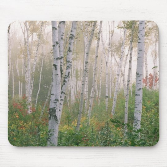 USA, New Hampshire. Birch trees in clearing fog Mouse Mat