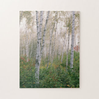 USA, New Hampshire. Birch trees in clearing fog Puzzles