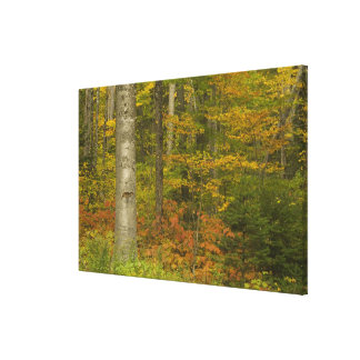 USA, New Hampshire, Livermore, White Mountain Canvas Print