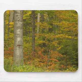 USA, New Hampshire, Livermore, White Mountain Mouse Pad