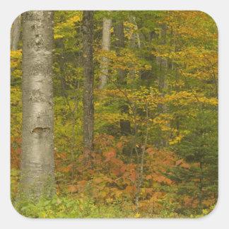 USA, New Hampshire, Livermore, White Mountain Square Sticker