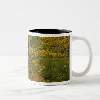 USA, New Hampshire, Livermore, White Mountain Two-Tone Coffee Mug