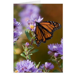 USA, New Hampshire. Monarch butterfly on aster Card