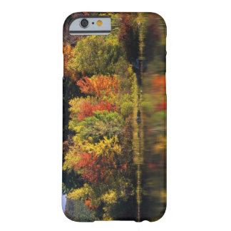 USA, New Hampshire, Moultonborough. Trees in Barely There iPhone 6 Case