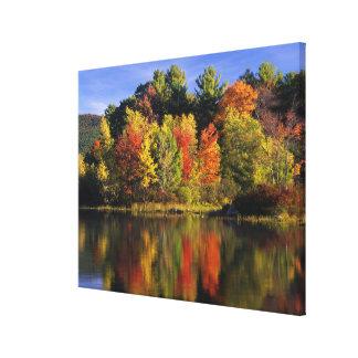 USA, New Hampshire, Moultonborough. Trees in Canvas Prints