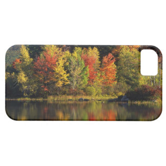 USA, New Hampshire, Moultonborough. Trees in iPhone 5 Cover