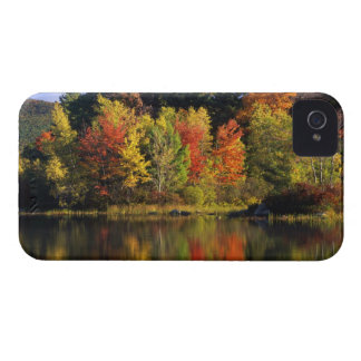 USA, New Hampshire, Moultonborough. Trees in Case-Mate iPhone 4 Case