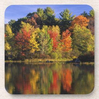 USA New Hampshire Moultonborough Trees in Drink Coaster