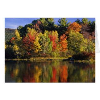 USA, New Hampshire, Moultonborough. Trees in Greeting Card