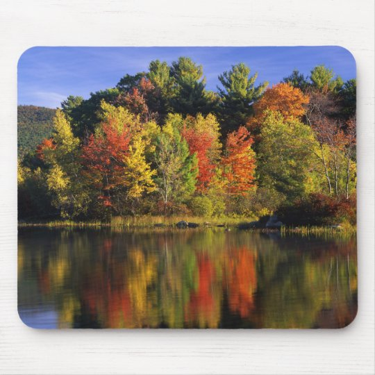 USA, New Hampshire, Moultonborough. Trees in Mouse Mat