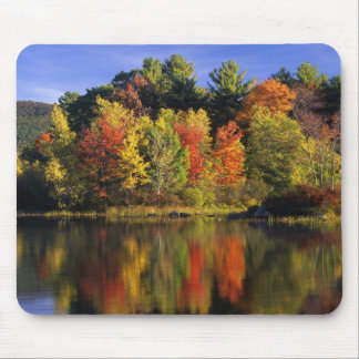 USA New Hampshire Moultonborough Trees in Mouse Pad