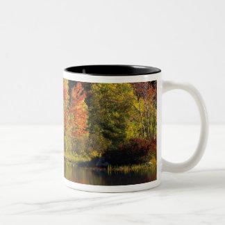 USA, New Hampshire, Moultonborough. Trees in Coffee Mugs