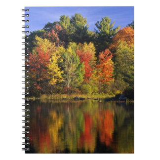 USA, New Hampshire, Moultonborough. Trees in Notebook