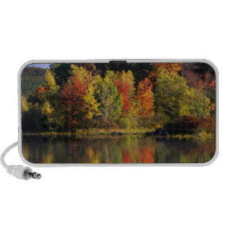 USA, New Hampshire, Moultonborough. Trees in Travelling Speaker