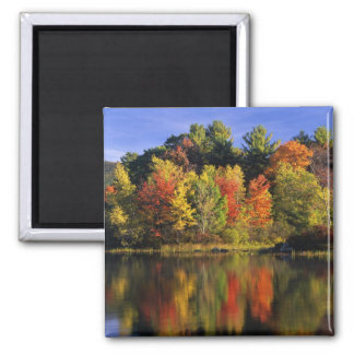 USA, New Hampshire, Moultonborough. Trees in Square Magnet