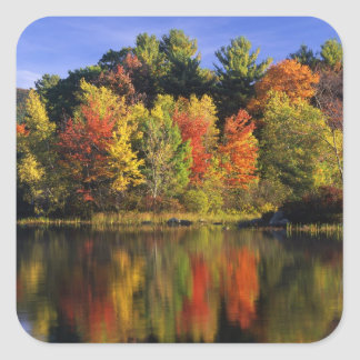 USA, New Hampshire, Moultonborough. Trees in Square Sticker