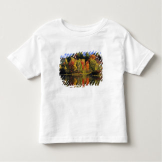 USA, New Hampshire, Moultonborough. Trees in Tee Shirts