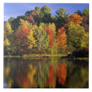 USA, New Hampshire, Moultonborough. Trees in Tile
