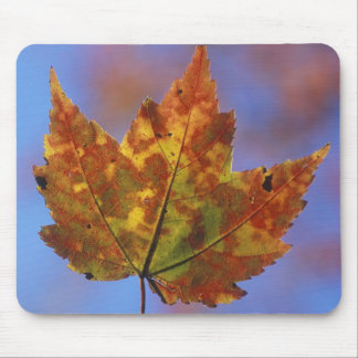 USA, New Hampshire, White Mountains, Franconia Mouse Mat