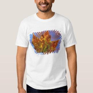 USA, New Hampshire, White Mountains, Franconia Shirts