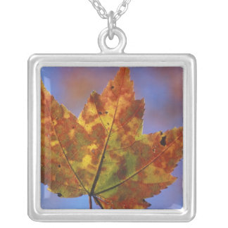 USA, New Hampshire, White Mountains, Franconia Silver Plated Necklace