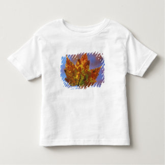 USA, New Hampshire, White Mountains, Franconia Tee Shirt