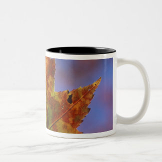 USA, New Hampshire, White Mountains, Franconia Two-Tone Coffee Mug