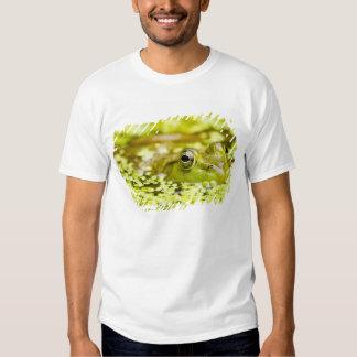 USA, New Jersey, Far Hills, Leonard J. Buck 5 Tee Shirts